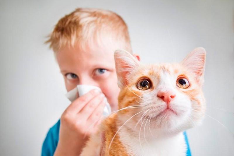 Шерсть животных - потенциальный аллерген