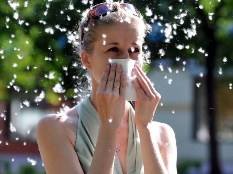 Аллергическая реакция на пух тополя