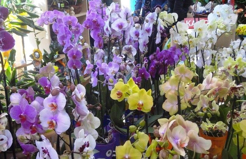Много орхидей в помещении