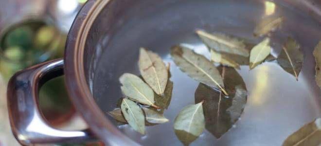 Отвар из лавровых листов