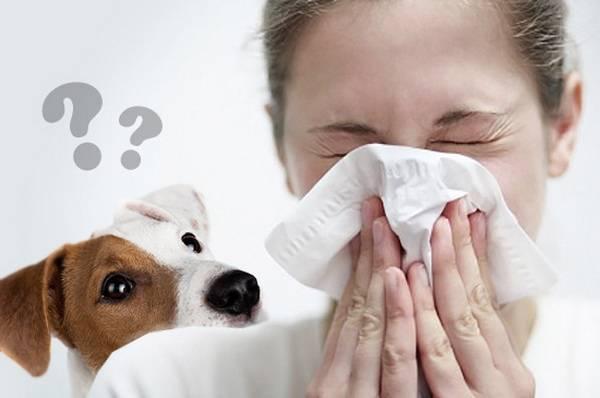 Аллергия на четвероногого друга