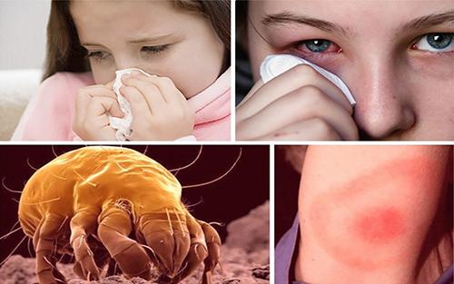 Реакции на пылевых клещей