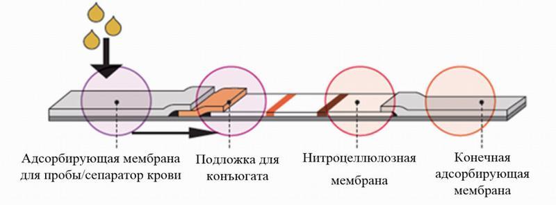 Контрольная мембрана